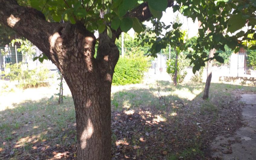 Cerratina Centro – Casa singola da ristrutturare con giardino